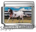 HORSE APPALOOSA STALLION Photo Italian Charm 9mm Link - 1 x HO017 Single Link