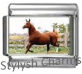 HORSE CHESTNUT MARE Photo Italian Charm 9mm Link - 1 x HO035 Single Bracelet Link