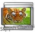 AN095 Italian Charm TIGER ANIMAL Photo Charm