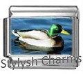 BI026 Italian Charm MALLARD DUCK BIRD Photo Charm