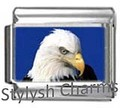 BI029 Bald Eagle Photo.jpg_Thumbnail1.jpg.jpeg