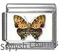 BI048 Italian Charm BUTTERFLY INSECT Photo Charm