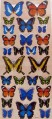 3 Dimensional  Butterfly Scrapbooking Card Making
