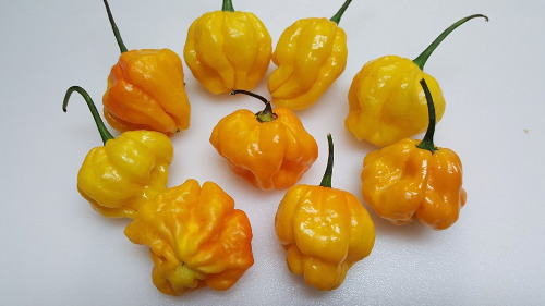 how to prepare scotch bonnet