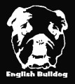 English Bulldog.jpg