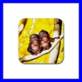 Rubber Coasters (4 Pack) 2 MONKEYS BABY Wild Animal Art (19940746)