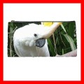 Pencil Case Pen Bag  COCKATOO BIRD Zoo Parrot Pet Gifts (22100671)