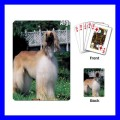 Playing Cards Poker Deck AFGHAN HOUND Dog Puppy Animal Pet Vet (15481435)