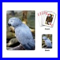Playing Cards Poker Deck AFRICAN GREY PARROT Bird Pet Animal Zoo (15482177)