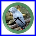Color Wall Clock AFRICAN GREY PARROT Bird Pet Animal Zoo Vet (27200465)