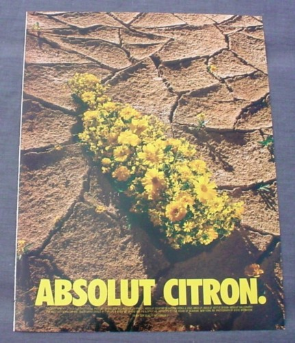 Magazine Ad for Absolut Citron, 1999, Yellow Flowers in Cracked Soil
