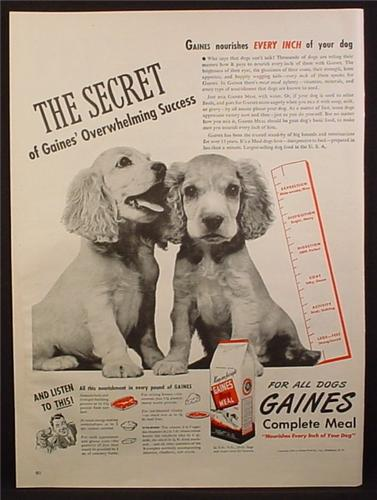 Magazine Ad for Gaines Dog Food, Spaniel Puppies, Ruler, 1945
