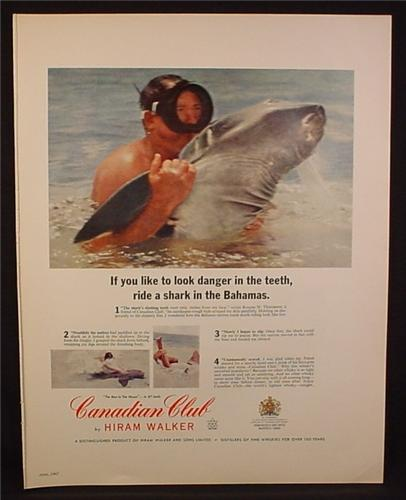 Magazine Ad for Canadian Club Whiskey, Riding a Shark In The Bahamas, 1967