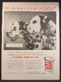 Magazine Ad For Gaines Homogenized Gaines Dog Meal Food, 2 Dalmatian Dogs, 1957