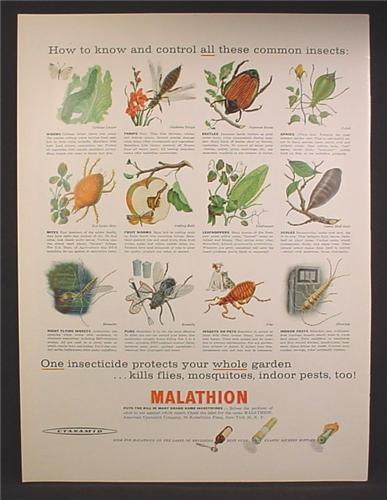 Magazine Ad For Malathion Insecticide, Shows All The Insects it Kills, Not Including People, 1957