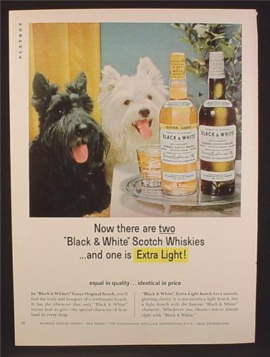 Magazine Ad For Black & White Scotch, Scotty Scottish Terrier & Westhighland Dogs, 1964