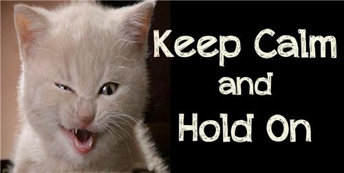 KEEP CALM & HOLD ON LICENSE PLATE WITH WHITE CAT KITTEN ANIMAL AUTO TAGS CAR NEW